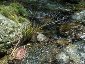 20090411県内某里川にて