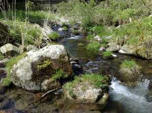 20090418湖北の小さな渓