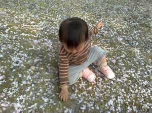 20090412桜じゅうたん
