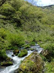 20090429湖北の渓