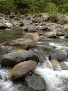 20090504岩魚の渓