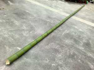 20090711この竹を
