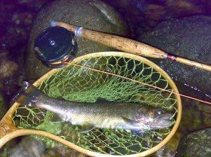 20070623スペックルドセッジで釣った尺イワナ