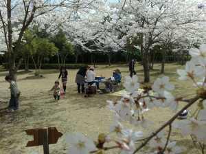 20100410花見