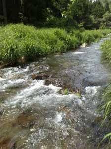 20100528初夏の渓
