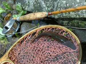 20100718アリンコフライに出た岩魚
